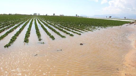 Mersin'de 109 dönüm tarım arazisi sular altında kaldı - Ekonomi haberleri
